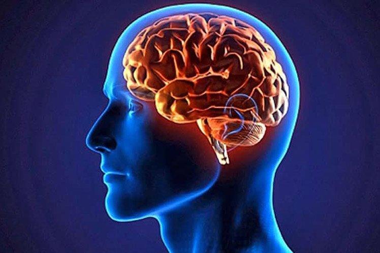 عروق مغز
