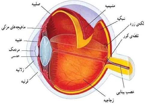 عصب چشم