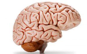 ورم مغزی